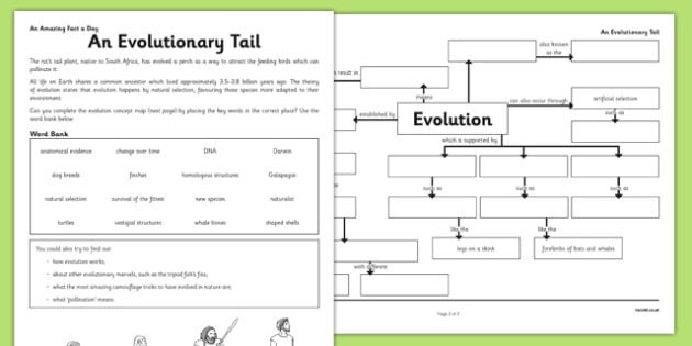 an evolutionary tail worksheet activity sheet evolution concept map an evolutionary tail - Evolution Worksheet