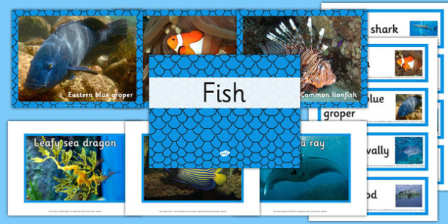 Australian Fish pack - australia, animals, fish, pack, australian
