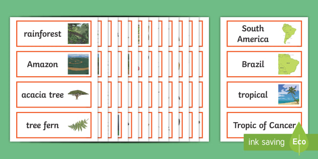 Rainforest Word Cards - rainforest, jungle, geography, forest, trees, word cards, cards, flash cards, snake, tiger, monkey, river, plants, green, amazon, insects, animals, acacia tree, tree fern, exotic, sloth, tapir