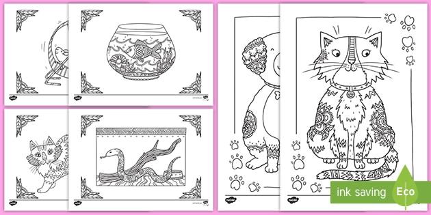 Animais De Estimacao Folhas De Colorir Teacher Made