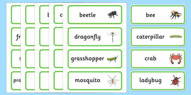 Minibeasts Word Cards - words, keywords, flash cards, visual aid