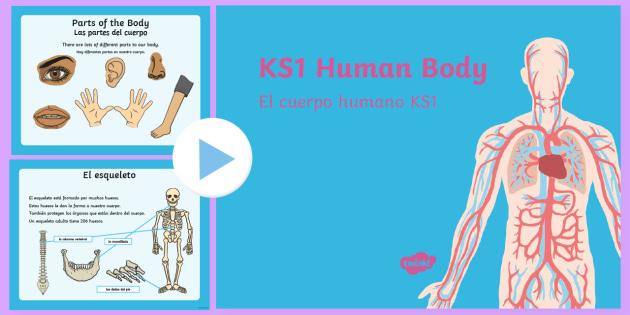 KS1 Human Body Information PowerPoint English/Spanish
