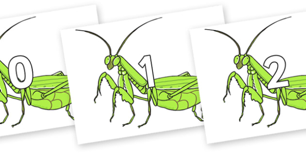 Numbers 0-31 on Praying Mantis - 0-31, foundation stage numeracy, Number recognition, Number flashcards, counting, number frieze, Display numbers, number posters