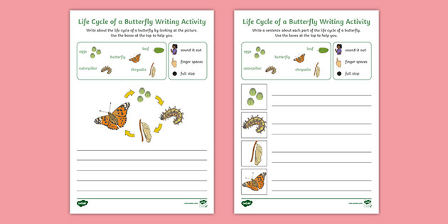Life Cycle of a Butterfly Early Writing Activities