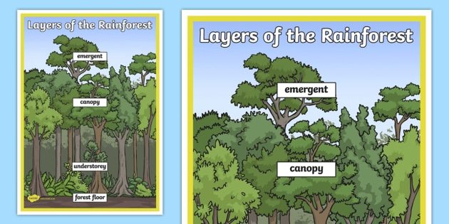 Layers Of The Rainforest Large Display Poster Teacher Made