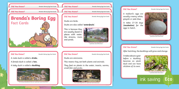 Brenda's Boring Egg Fact Cards - Twinkl originals, fiction, KS1, EYFS, ducks, story sack, home learning, parents, information, duck l
