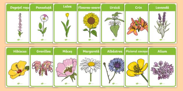 Flori De Primăvară Planșe Teacher Made