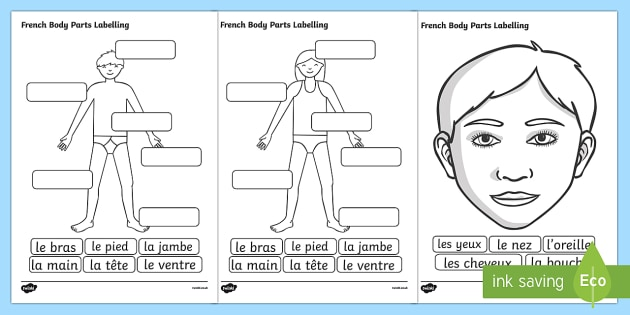 T T French Body Parts Labelling Worksheet Ver on teeth labelling worksheet