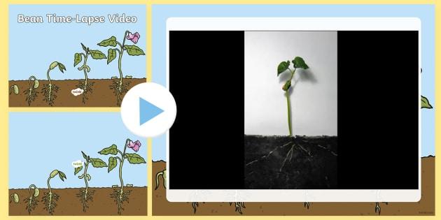 Bean Time-Lapse Video PowerPoint - bean, powerpoint, grow, video