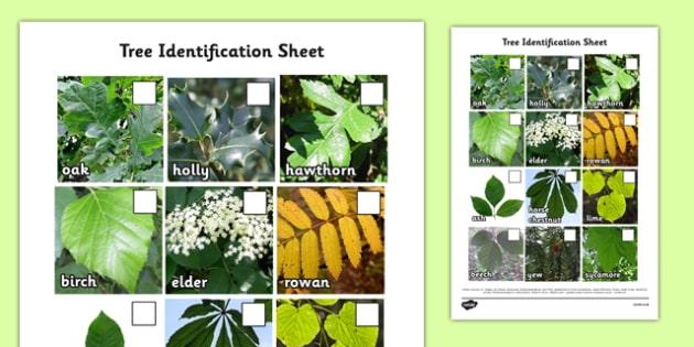 Tree Identification Photo Sheet - tree, identification, photo sheet, photo, sheet, tree identification, activity