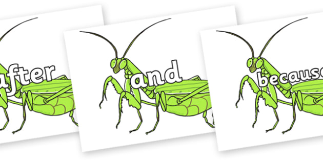 Connectives on Praying Mantis - Connectives, VCOP, connective resources, connectives display words, connective displays