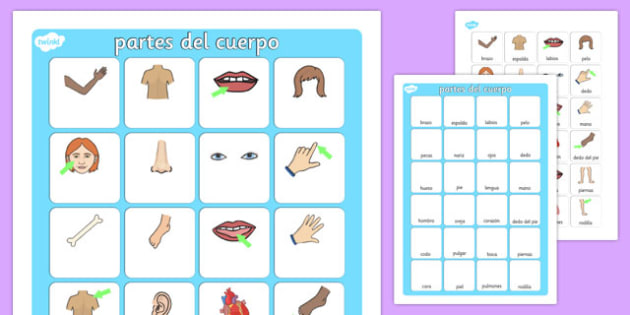 partes del cuerpo Vocabulary Matching Mat Spanish - spanish, my body, vocabulary poster, poster, my body vocabulary, display poster, information poster, poster for display