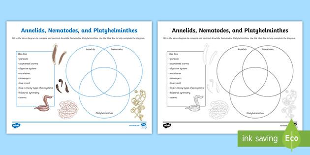 Phylum platyhelminthes nematoda és annelida - assisi.hu - Platyhelminthes fonálféreg és annelida