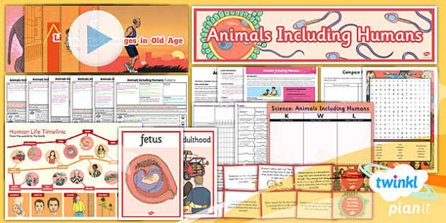 Science: Animals Including Humans Year 5 Unit Pack