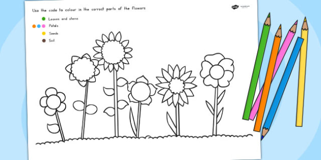Colour Code Colouring Flowers Sheet - Australia, Colour, Code