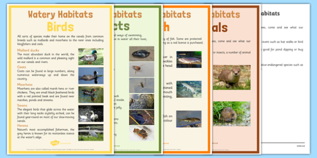 Canal Habitats Display Poster Pack - canal habitats, display poster, pack