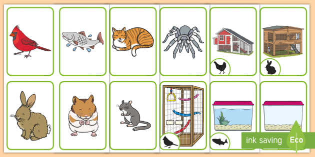 Pets and Their Homes Pairs Matching Cards - pets month
