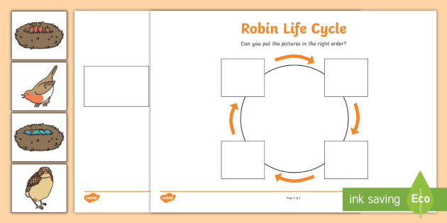 Image Result For Life Cycle Of The Chicken Worksheet