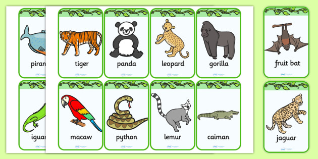 T T 9936 Jungle Flashcards on Number 8 Worksheets