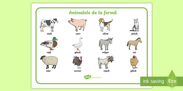Animale Dogs for