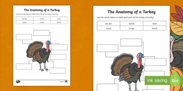 Anatomy of a Turkey Activity Sheet