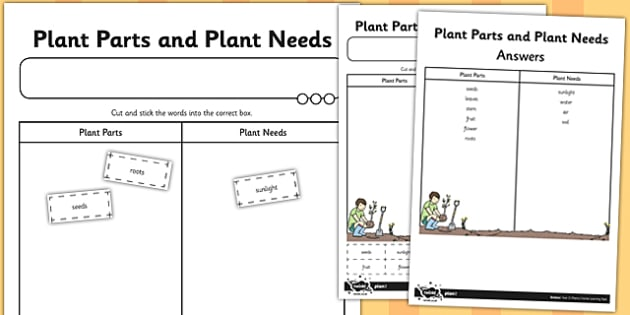 Plant Parts and Plant Needs Cut and Stick Activity Sheet - cut, worksheet