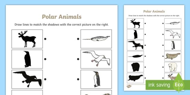 Polar Animals Shadow Matching Worksheet - polar, matching, shadow