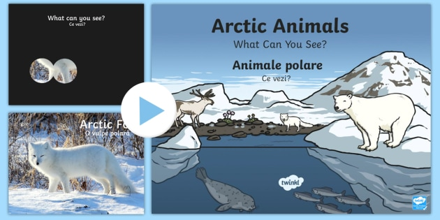 Arctic Animals What Can You See? PowerPoint English/Romanian - The Arctic, Polar Regions, north pole, south pole, explorers, polar animals, animals,Romanian-transl