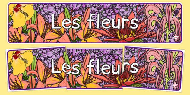 Les fleurs - french, plants, flower, header, display, les fleurs