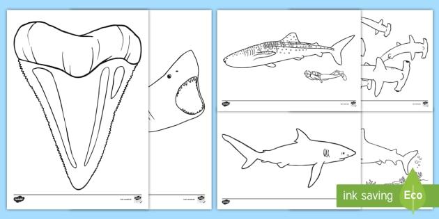 Haie Ausmalbilder Tiere Fische Hai Haifisch Meer Ozean Lebewesen