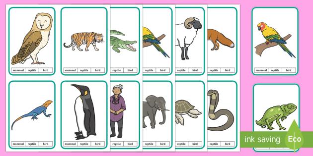 CfE Animal Classification Peg Activity - Science games, science activities, animal classification, animal sorting, peg games, biodiversity, c