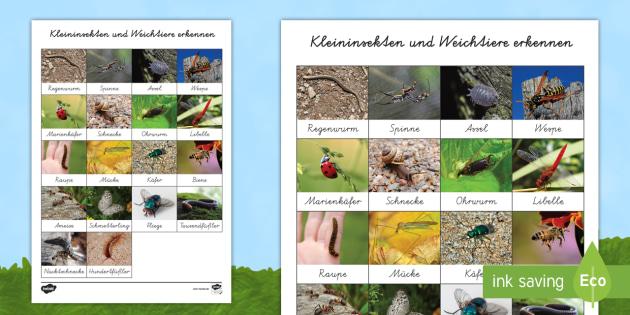 NEW * Kleininsekten und Weichtiere erkennen Arbeitsblatt
