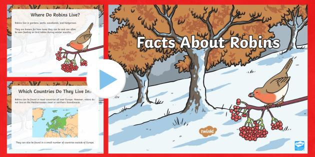 KS1 Facts about Robins PowerPoint - robins, robin, garden birds, waitrose advert, British wildlife