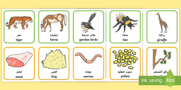 Animals and What They Eat Matching Cards Arabic/English - animal