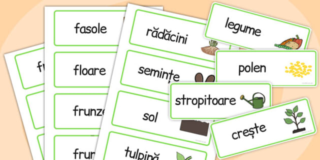 Creșterea plantelor - Cartonașe - creștere, plante, dezvoltare, cartonașe, jetoane, științe, romanian, materiale, materiale didactice, română, romana, material, material didactic