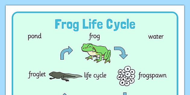 Frog life cycle word mat minibeasts word mat frogspawn frog life cycle word mat minibeasts word mat frogspawn tadpole ccuart Choice Image