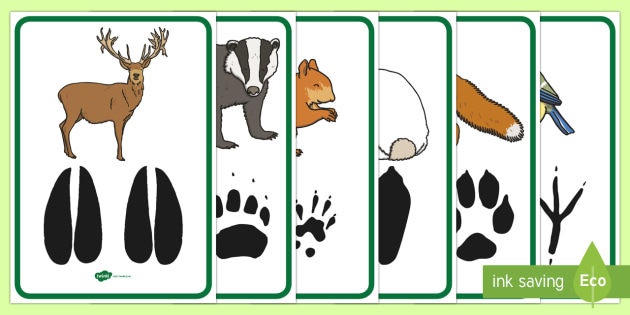 woodland animal footprints poster pack forest  animals clip art of deer in woods clip art of deer in woods