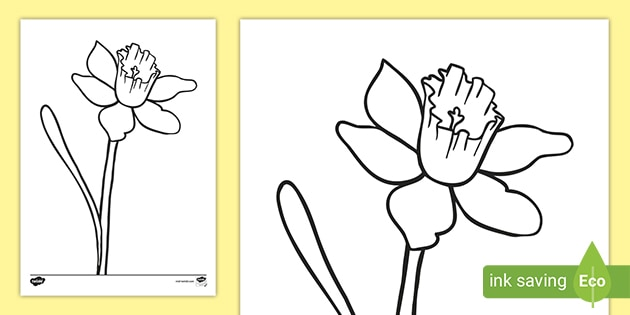 Daffodil Coloring Sheet Teacher Made