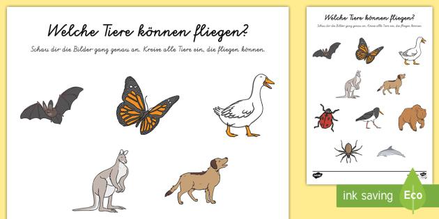 Welche Tiere können fliegen? Arbeitsblatt - Frühling