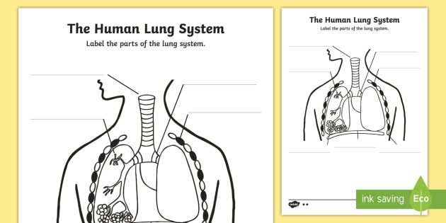 Human Body Lungs Diagram Labelling Worksheet    Worksheet
