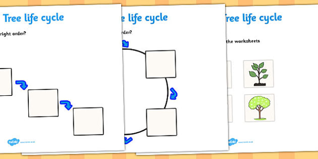 Sequencing The Life Cycle Of An Apple Tree Worksheets for all ...