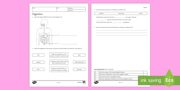 KS3 Digestion Homework Activity Sheet - Homework, digestion, digestive, digestive system, nutrition, eating, healthy lifestyle, enzymes, foo
