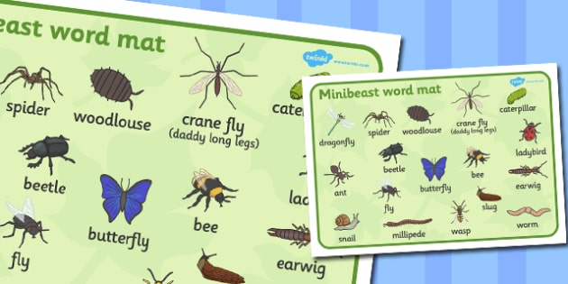Minibeast Word Mat - Word mat, Minibeasts, Topic, Foundation stage, knowledge and understanding of the world, investigation, living things, snail, bee, ladybird, butterfly, spider