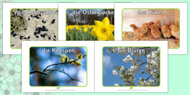 Spring Display Photos German - german, Spring, seasons, photo, display photo, lambs, daffodils, new life, flowers, buds, plants, growth