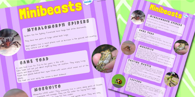 Minibeasts Large Information Poster A2 - mini beasts, display