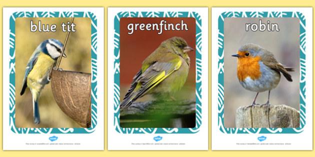 British Garden Bird Display Photos - display photos, bird, photos