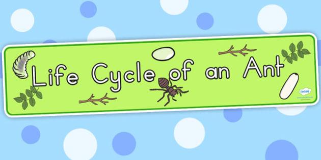Ant Life Cycle Display Banner - life cycles, lifecycle, header