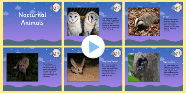 Nocturnal Animals PowerPoint - animals, nocturnal animals ...