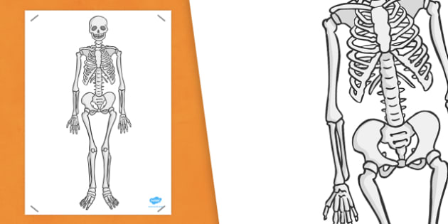 Simple A2 Skeleton - science, display, humans, bones, big, KS1, KS2, key stage 1, key stage 2