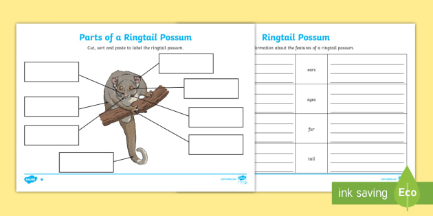 Parts Of A Ringtail Possum Differentiated Worksheet Activity